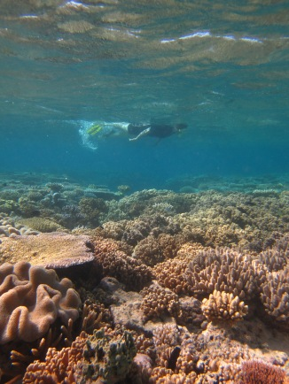 My trip to the Great Barrier Reef